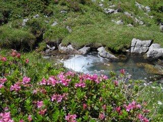 山から流れ<br />出る小川